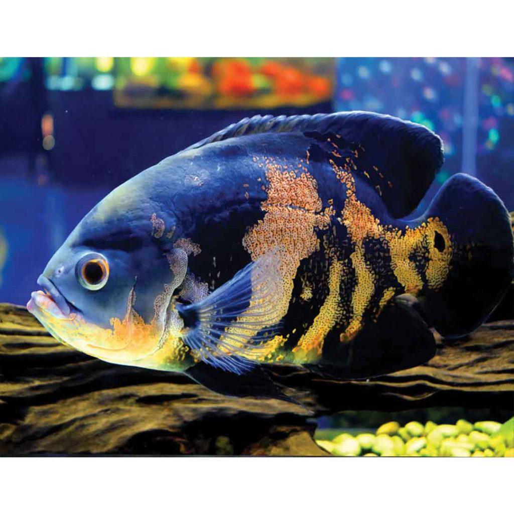 باهوش-ترین-ماهی