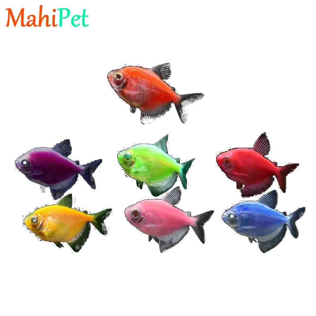 ماهی ویدو رنگی (XL)