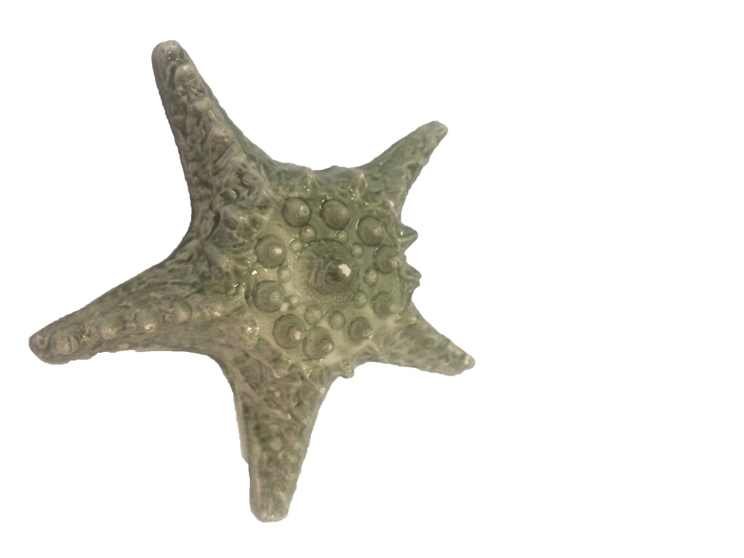 ستاره دریایی SB