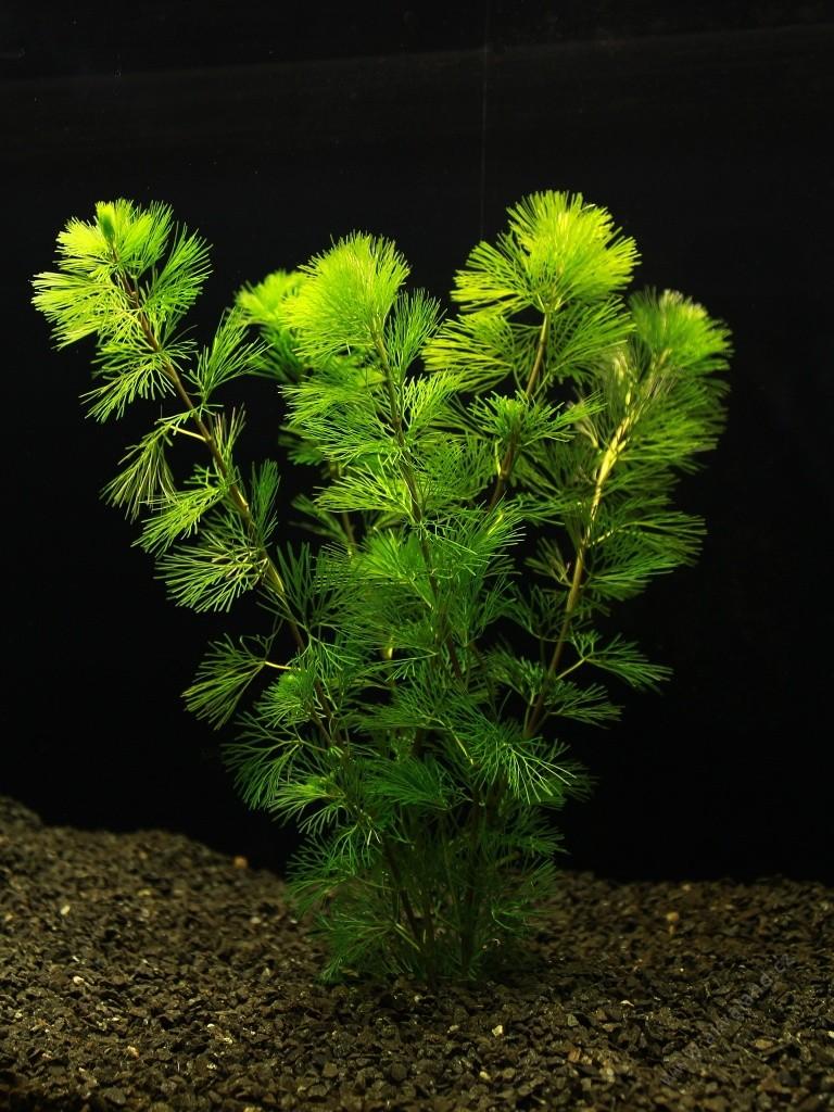 پک گیاه شماره 5