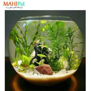 پلنتاریوم گیاهی خاص شماره (2)