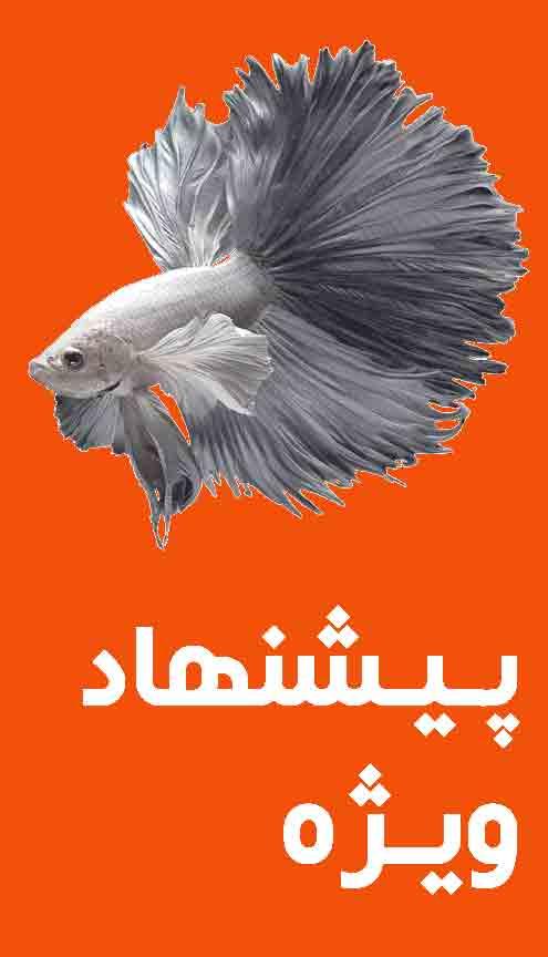 پیشنهاد ویژه ماهی پت 2