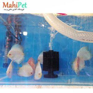 ماهی دیسکس وایت پلاتینیوم 4.5 اینچ (2)